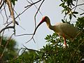 Black Point Wildlife Drive, Merritt Island FL - Flickr - Rusty Clark (2).jpg