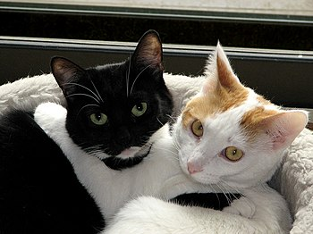 Cats - Hugs and love. They do have two beds......