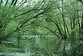 Blagdon Lake - Bristol Water Company's Reservoir - geograph.org.uk - 46592.jpg