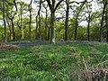 Bluebell Woods (3).jpg