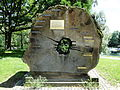 Bonn-rheinaue-mammutbaum-23.jpg