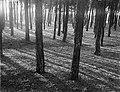 Bos bij Laren, Bestanddeelnr 252-0877.jpg