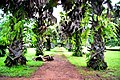 Botanic garden limbe109.jpg