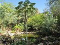Botanical garden of Eilat (4).JPG