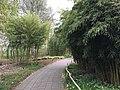 Botanische tuinen Utrecht 22.jpg