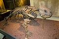 Bradysaurus baini.jpg