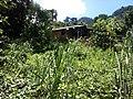 Brasil rural - panoramio (10).jpg