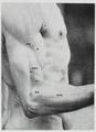 Braus 1921 164.png