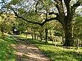 Bridleway to Gumber Corner - geograph.org.uk - 1004706.jpg