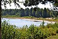 Brody Ratnivskyi Volynska-Chyste lake nature reserve-view from the west coast-1.jpg