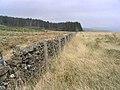Brown Rig - geograph.org.uk - 424305.jpg
