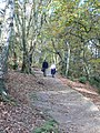 Bulkeley Hill Wood - geograph.org.uk - 1561667.jpg