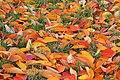Bunte Blätter (45635784052).jpg