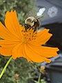 Busy as a bee.jpg
