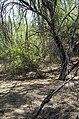 Butcher Jones Trail, Burro Cove and Beyond, Tonto National Park, Arizona - panoramio (33).jpg
