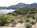 Butcher Jones Trail - Mt. Pinter Loop Trail, Saguaro Lake - panoramio (114).jpg