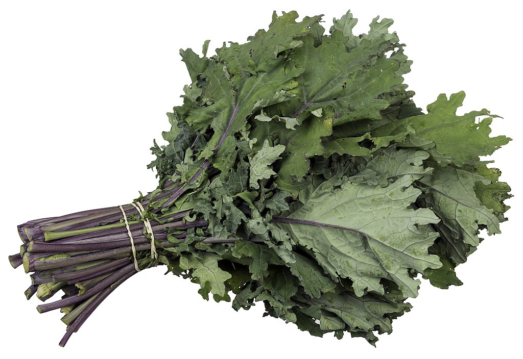 CSA-Red-Russian-Kale.jpg