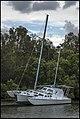 Cabbage Tree Creek Sandgate and Tri Cat-1 (24769778788).jpg