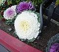 Cabbage flowers.jpg