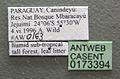 Camponotus balzani casent0173394 label 1.jpg