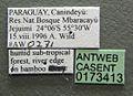 Camponotus dimorphus casent0173413 label 1.jpg
