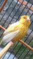 Canary Take A Bath.png