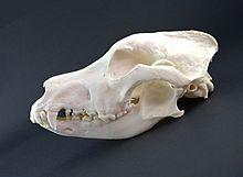 Image Result For German Shepherd For