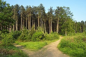Heart of England Way - Image: Cannock Chase near Castle Ring geograph.org.uk 184015