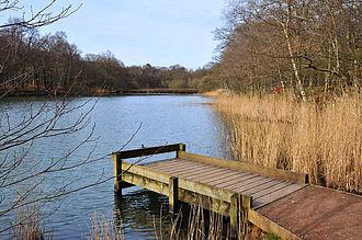 Cannop Ponds - Cannop Ponds