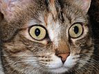Cat eyes 2007-1.jpg
