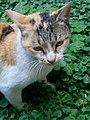 Cat in the garden 2.jpg