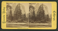 Cathedral Rocks, 2670 feet high, from Robert N. Dennis collection of stereoscopic views.png