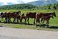 Caton Karagaiskiy District, East Kazakhstan - panoramio - 7777777kz (27).jpg