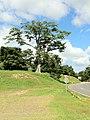 Ceiba - panoramio.jpg