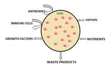 Schematic illustrating cell microencapsulation.