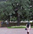 Centro de Houston.jpg