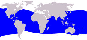 Description de l'image  Cetacea_range_map_Dwarf_Sperm_Whale.png.