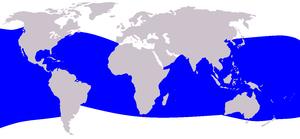 Dwarf sperm whale - Image: Cetacea range map Dwarf Sperm Whale