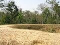Charaideo Maidam of Ahom Kings at Charaideo in Sivasagar, Assam 5.jpg