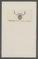 Chelifer - Print - Iconographia Zoologica - Special Collections University of Amsterdam - UBAINV0274 069 03 0002.tif