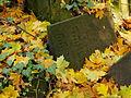 Chenstochov ------- Jewish Cemetery of Czestochowa ------- 123.JPG