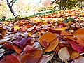 Cherry leaves 03.jpg