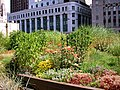 Chicago-City-Hall-Green-Roof 01.jpg