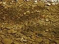 Chondrostoma toxostoma 05.JPG