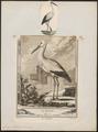 Ciconia alba - 1700-1880 - Print - Iconographia Zoologica - Special Collections University of Amsterdam - UBA01 IZ17600027.tif
