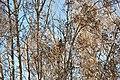 Cigüeñas en temblones.jpg