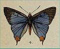 CigaritisAbnormisMoore1884MAC1.jpg
