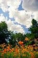 "Cincinnati - Spring Grove Cemetery & Arboretum ""A Summer Walk"" (9275140310).jpg"