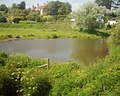 Cockwood , A Pond - geograph.org.uk - 1237168.jpg