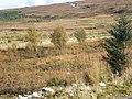 Coire Buidhe Moorland - geograph.org.uk - 1526271.jpg
